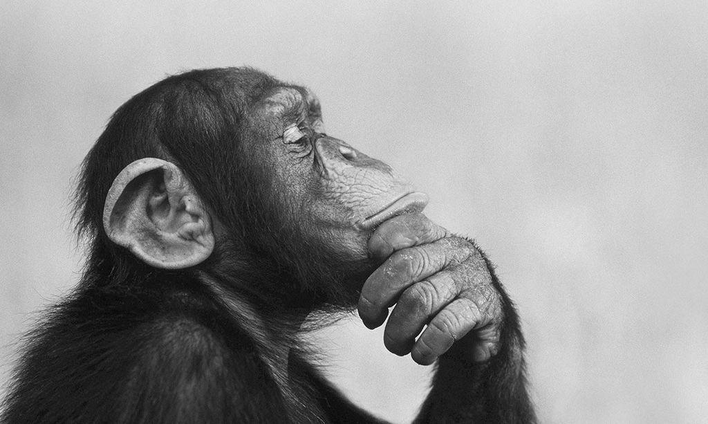 حقائق مثيرة للاهتمام حول بعض الحيوانات المفضلة لديك الفيلة الأرانب ثعلب الماء الفراشات الشامبانزي معلومات غريبة عن بعض الحيوانات